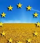 Reduced forecast of yield of grain and rapeseed for the EU
